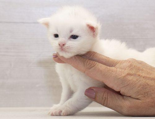 Der C-Wurf ist 2 Wochen alt