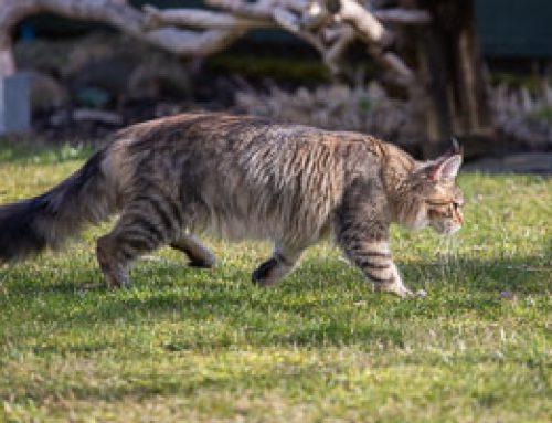 Wolf Girl unterwegs im Garten