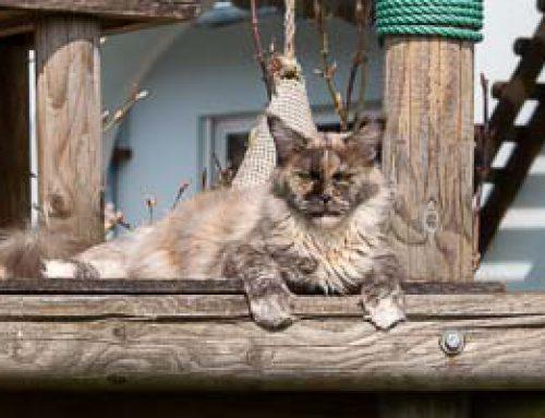 Donna auf dem Außenkkratzbaum
